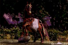 20150037 Paarden Donderen